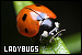 Insects: Lady Bugs