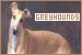 Dogs: Greyhounds
